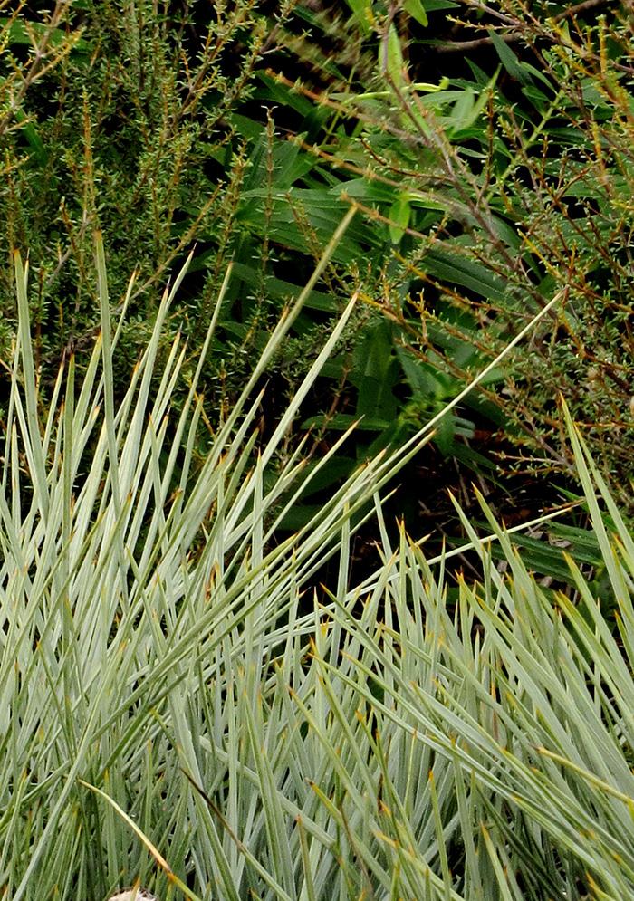 speargrass - te motu kairangi