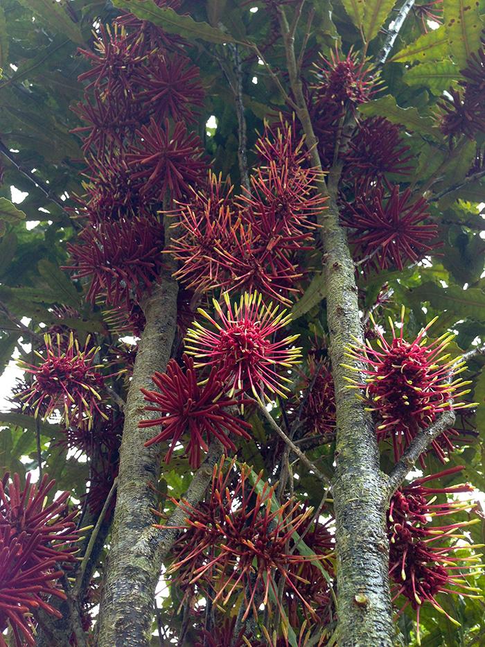 Rewarewa Te Motu Kairangi Miramar Ecological Restoration