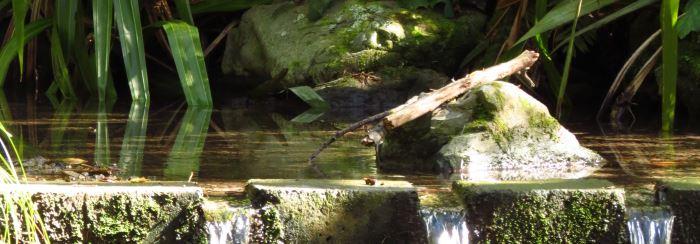 Ponds Wetlands Amp Water Features Te Motu Kairangi